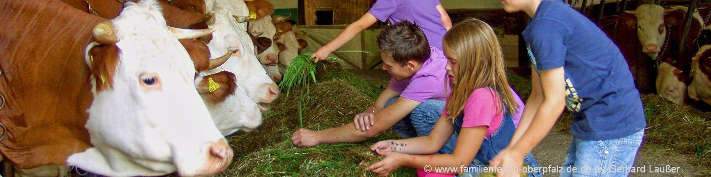bauernhofurlaub-bayern-kinderferien-kuhstall-kuehe-fuettern-1400
